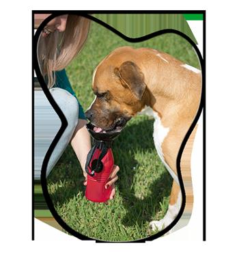 Starlyf Doggy Bottle per cani: scheda tecnica e acquisto, opinioni e recensioni, prezzo